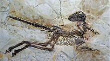 Fundsache, Nr. 1298: Dino mit langen Federn in China