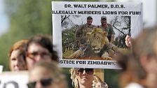 """""""Ich bedauere zutiefst, dass das Hobby, das ich so liebe und mit großer Verantwortung und in völliger Legalität verfolge, zum Tod dieses Löwen führte"""", hieß es in der Erklärung weiter. Tatsächlich steht das Schicksal von Cecil nur stellvertretend für Tausende Wildtiere, die in Afrika Hobbyjägern mit viel Geld zum Opfer fallen."""