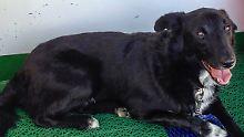 Hund war tagelang ausgerissen: Flecki ist wieder da