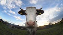 Bauern machtlos: Aldi und Norma senken Butterpreise