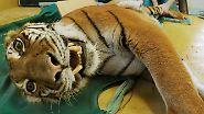 Das ist tragisch, vor allem, wenn es sich um Tiere handelt, deren Bestand vom Aussterben bedroht ist.