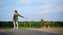 Geruchssache: Bock auf Ziege
