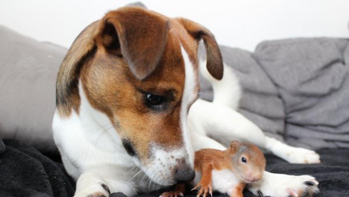 tierliebe auf den ersten blick hund killer rettet eichh rnchen baby n. Black Bedroom Furniture Sets. Home Design Ideas