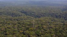 """Deutsches Projekt in """"grüner Lunge"""": 325-Meter-Turm ragt aus dem Amazonas"""