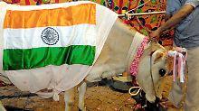 Im Hinduismus sind Kühe heilig: Das Töten ist in vielen Bundesstaaten verboten.