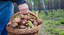Frage & Antwort, Nr. 400: Darf man Pilzgerichte aufwärmen?