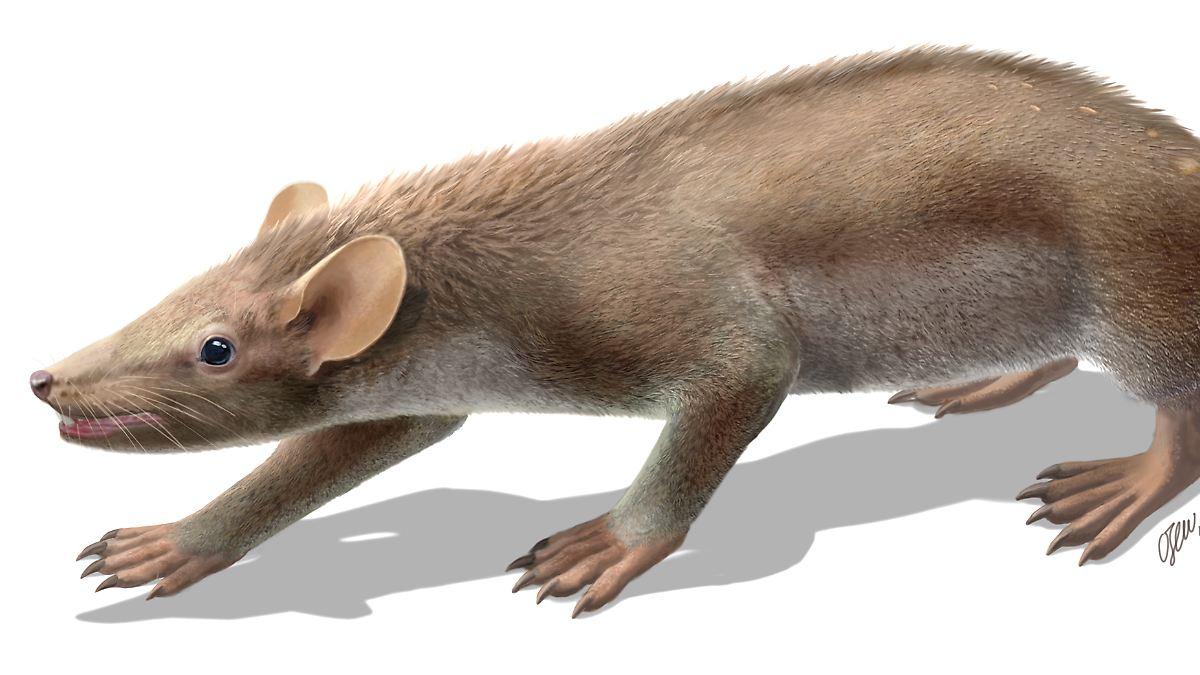 Die Ersten Säugetiere