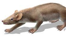 Fundsache, Nr. 1309: Ur-Säugetier mit Haaren und Stacheln