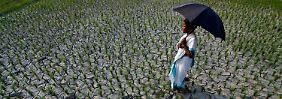 Bei 13 Grad entscheidende Marke: Erwärmung bremst Wachstum - weltweit