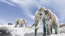 Auferstehung eines Urriesen: Mammutfant könnte Sibirien besiedeln
