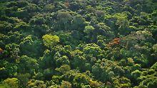 100 Millionen Hektar neuer Wald: Afrikaner planen gigantische Aufforstung