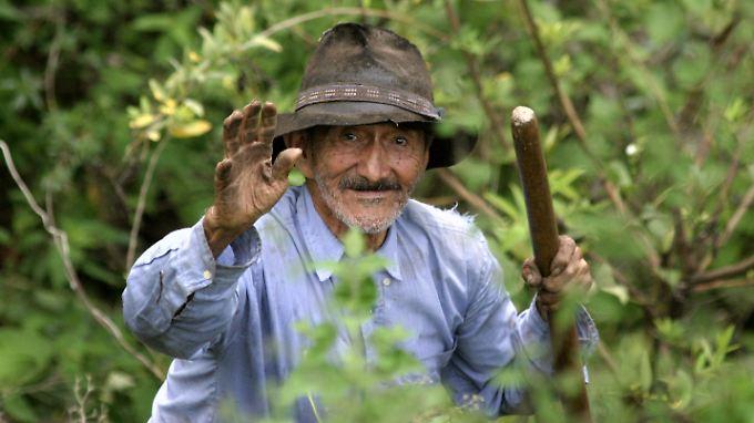 Timoteo Arboledo ist 98 Jahre alt. Um zu seinem Feld zu gelangen, muss er täglich mehrere hundert Meter eines Berges erklimmen.