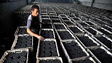 Arbeit in einer Brikettfabrik im chinesischen Quingdao.