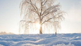 Freundlich und frostig: Woche startet mit traumhaften Winterwetter