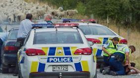 Kaum zu glauben, aber wahr: Schafe setzen Flucht von Dieben nach 4 Stunden Verfolgungsjagd ein Ende