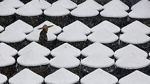 """""""Eisig"""" wie noch nie zuvor: Extreme Kältewelle lässt Asien bibbern"""