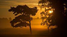 40 Kilometer Sandstrand und viel Sonne: Ostseeinsel Usedom