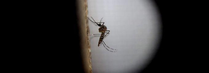 Hauptübertragungsweg für das Zika-Virus sind Stechmücken.