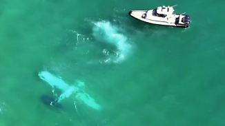Kaum zu glauben, aber wahr: Flugstunde endet im Wasser