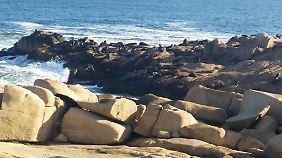 Touristen können die unzähligen Seelöwen beobachten.