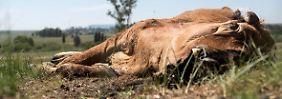 50 Millionen von Hunger bedroht: El Niño schickt die Extreme nach Afrika