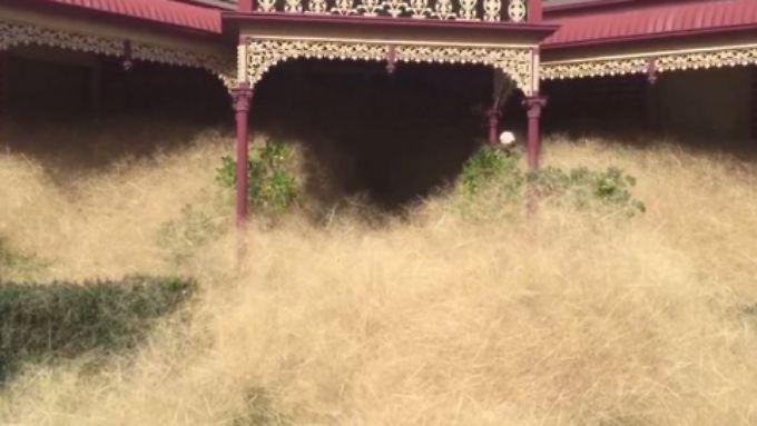 Meterhoch stehen die Gräser vor einer Hausfront.