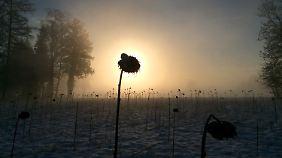 Ruhige Aussichten für Freitag: Trotz Sonne lässt der Frühling auf sich warten
