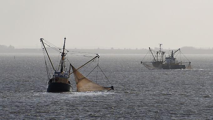 Zwei Fischkutter zwischen Sylt und der dänischen Insel Rømø: Nach dem Willen der Umweltministerin soll es bald ganzjährige Schutzzonen in der Nordsee geben.