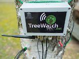 Der deutsche Wald geht online: Bäume können jetzt twittern