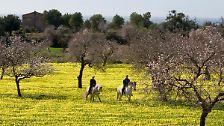 Keine Spur vom Ballermann: Das andere Mallorca