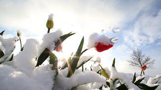 Nicht alles ist schlecht: Wen der Wintereinbruch im April freuen sollte