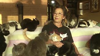 Kombination aus Haus und Tierheim: Katzenliebhaberin schafft Paradies für Hunderte Stubentiger