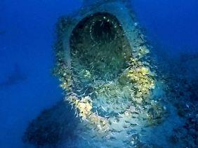 Inzwischen ist das U-Boot Teil der Unterwasserwelt.