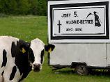 Auf einer Weide in der Nähe von Sehlendorf (Schleswig-Holstein)