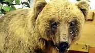 Ein zunächst herzliches Willkommen wie 2006 dürfte der erste Bär nach Bruno allerdings nicht erwarten. Inzwischen gibt es einen damals noch fehlenden Managementplan für Bären, ein neuer Problembär dürfte schneller abgeschossen werden.