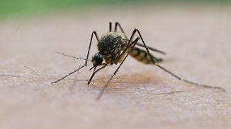 Schnecken, Mücken, Käfer: Nasses Wetter begünstigt tierische Plagegeister