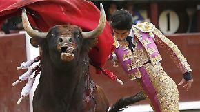 Live-Übertragung im spanischen TV: Torero durch 500-Kilo-Stier in der Arena getötet