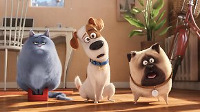 """""""Pets""""-Premiere in Berlin: Was machen Haustiere, wenn das Herrchen nicht im Haus ist?"""