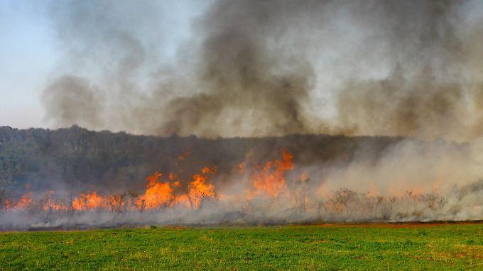 Brandrodung in Brasilien: Unermesslich große Flächen Wald gehen Tag für Tag verloren - meist, um Ackerflächen zu gewinnen.
