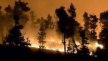 Schlimmer Waldbrand auf La Palma: Deutscher Klopapier-Brandstifter verurteilt