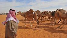 Gleiche Herkunft wie MERS-Erreger: Auch Erkältungsviren stammen von Kamelen