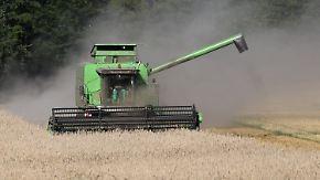 Zu feuchter Sommer: Wetter vermiest Bauern die Ernte