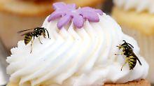 Forscher bauen Gifte nach: Neue Impfung für Wespenstich-Allergiker
