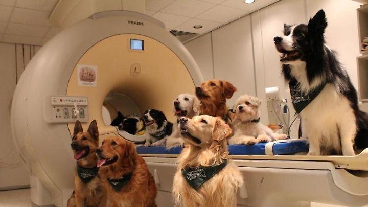 Trainierte Hunde an einem Magnetresonanztomographen der Eötvös-Loránd-Universität.