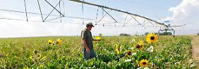 Kommission will genauer prüfen: Monsanto-Übernahme macht EU Sorgen