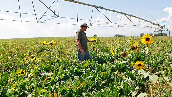 Monokultur: Ein marktbeherrschender Konzern könnte höhere Preise von Landwirten fordern, fürchtet die EU.