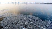 Der größte See in Vietnams Hauptstadt Hanoi bietet ein Bild des Grauens: ....