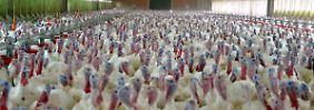 Wer mehr als 15.000 Hennen hält, soll künftig einen Bebauungsplan aufstellen müssen.