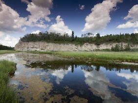 Im Wood-Buffalo-Nationalpark.