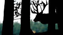 Goldener Herbst in derSchorfheide: Ausspannen im einstigen Promi-Jagdgebiet